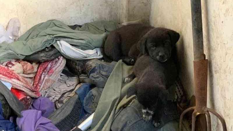 Cerca de 30 cães são resgatados após ficarem sem água e comida em Blumenau, SC