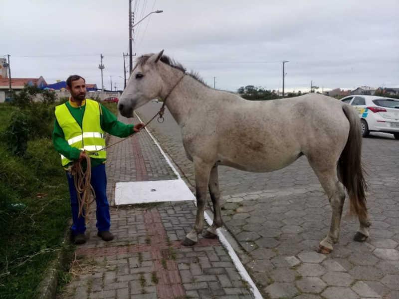Decreto regulamenta adoção de animais de grande porte em Navegantes, SC