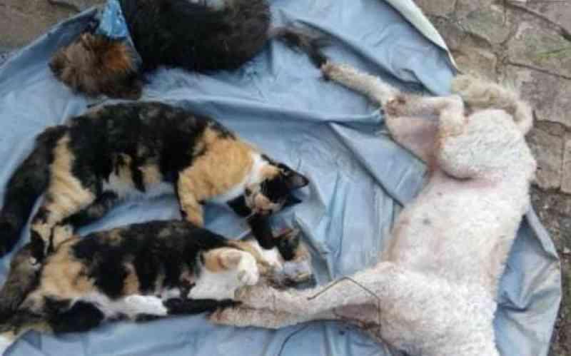 Seis animais morrem envenenados num dia em Ilhota, SC