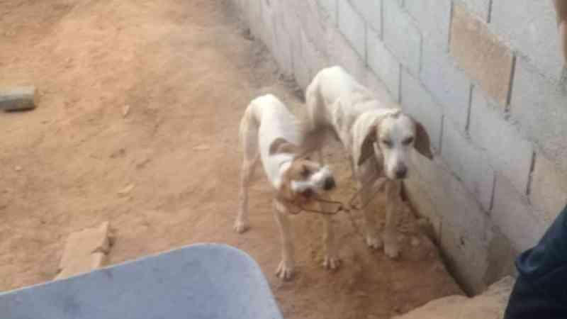 Homem é preso por maus-tratos a animais em Águas de Lindoia, SP