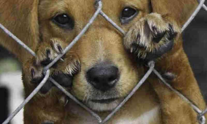 Tutores de animais denunciam Centro de Referência Animal de Ilhabela (SP) por maus-tratos
