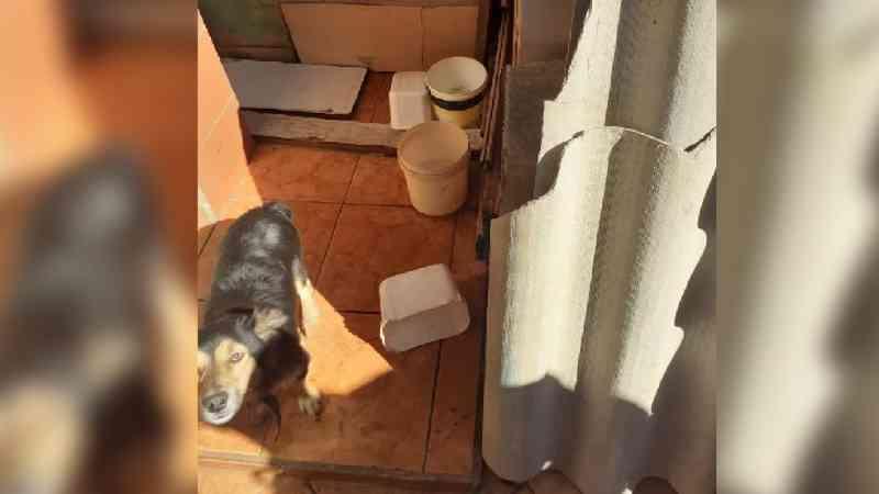 Mulher é detida e multada por maus-tratos a cães em Itapeva, SP