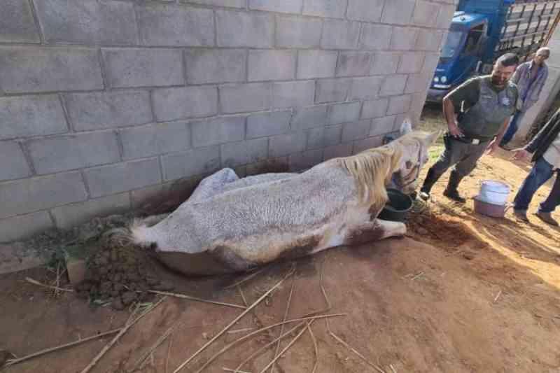 Égua e filhote de 2 meses são encontrados em situação de maus-tratos em Limeira, SP