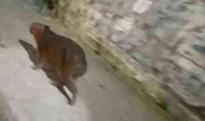 Capivara é encontrada morta após negligência dos órgãos competentes em Mauá, SP
