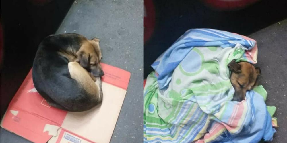 Cão é coberto enquanto dormia no frio por benfeitora, em São José dos Campos, SP