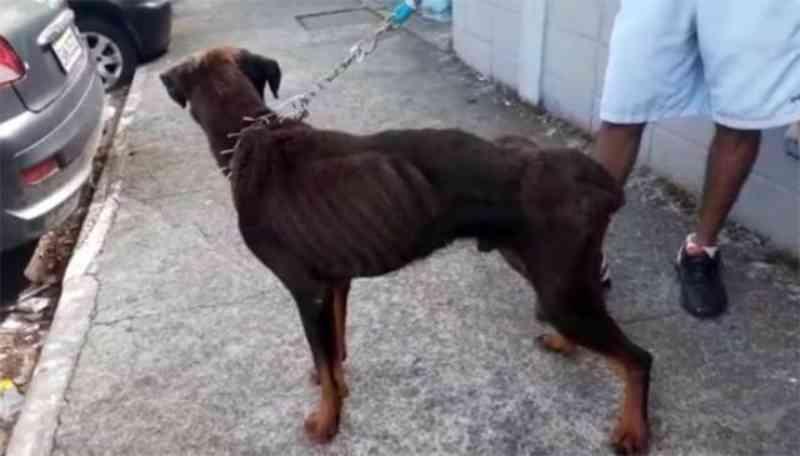 Homem é preso flagrante por maus-tratos contra cão em São José dos Campos, SP