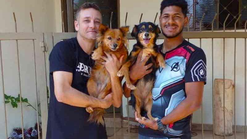Blue e Babalu, cachorras que perderam os tutores para Covid-19, são adotadas em Sertãozinho, SP