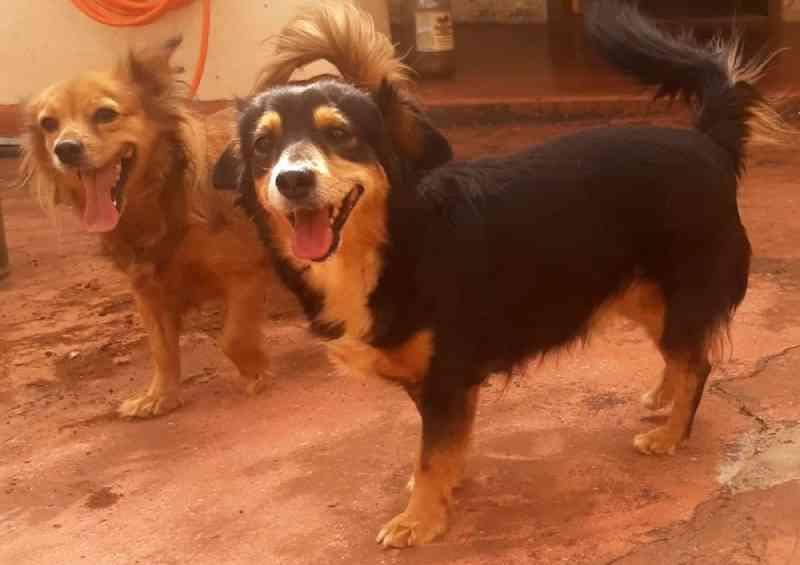 Dois meses após casal morrer com Covid-19, cachorras aguardam adoção em Sertãozinho, SP