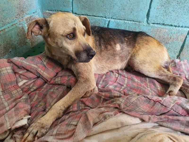 Em quatro meses, Sorocaba (SP) resgata mais de 70 animais vítimas de maus-tratos