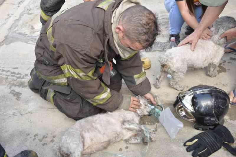Bombeiros dão oxigênio e salvam cães resgatados de casa em chamas no interior de SP