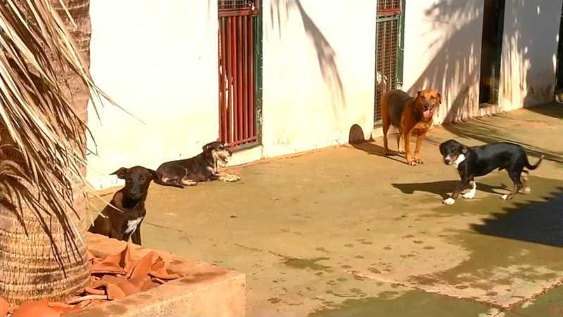 Abandono de animais cresce mais de 70% em março em Araçatuba, SP