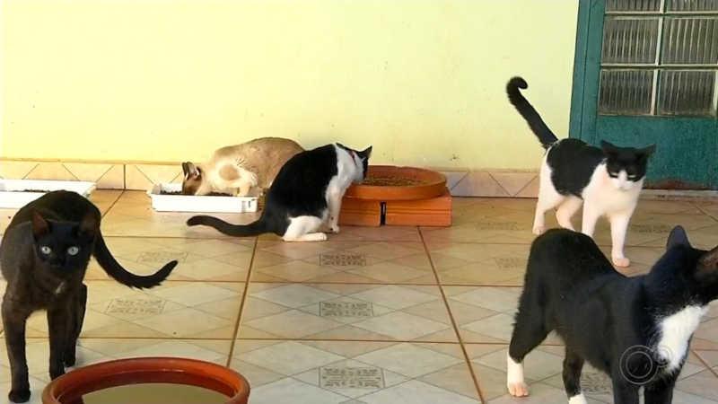 Gatos que foram resgatados vivem em Organização Não Governamental em Araçatuba — Foto: Reprodução/TV TEM