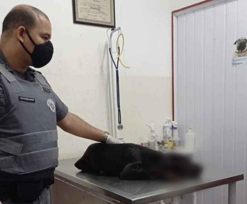 Homem é preso em flagrante após agredir cachorro com uma foice em Araçatuba, SP