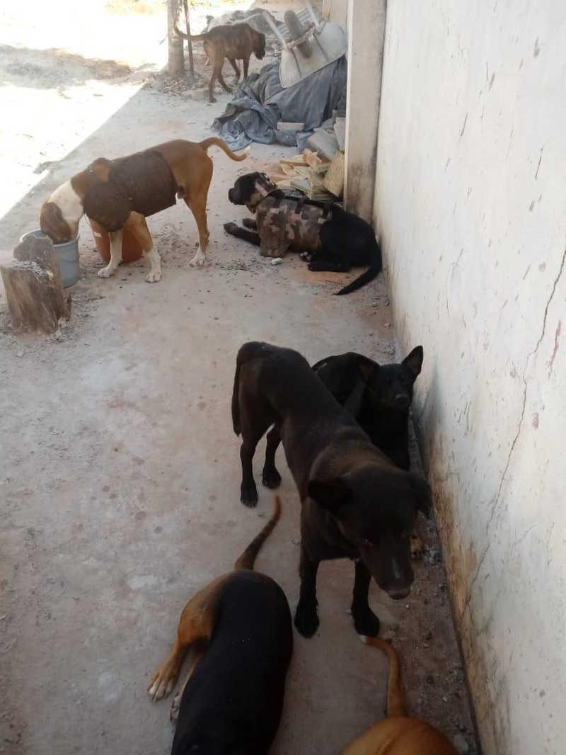 Homens são multados por caça de animais silvestres com uso de cães em Bariri, SP