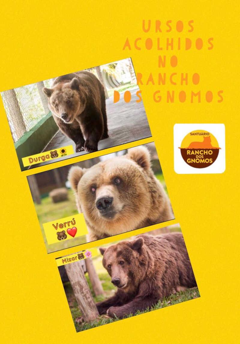 O Rancho dos Gnomos abriga atualmente três ursos: Verrú, Mizar e Durga