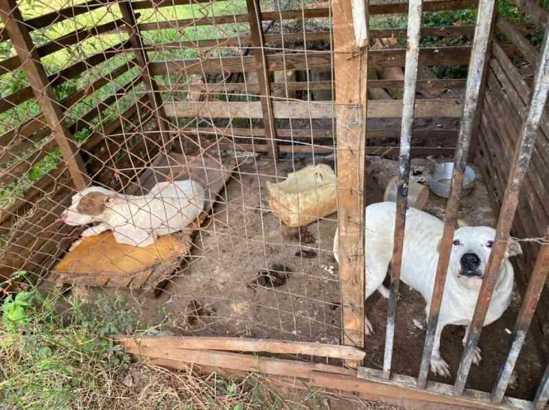 Homem é preso suspeito de manter 24 cães usados em CAÇADAS em situação de maus-tratos no interior de SP