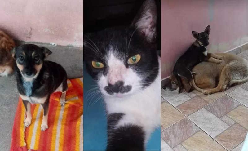 Angélica começou a adotar animais aos poucos e, atualmente, cuida de oito pets — Foto: Arquivo Pessoal/Angélica Duclos Amado