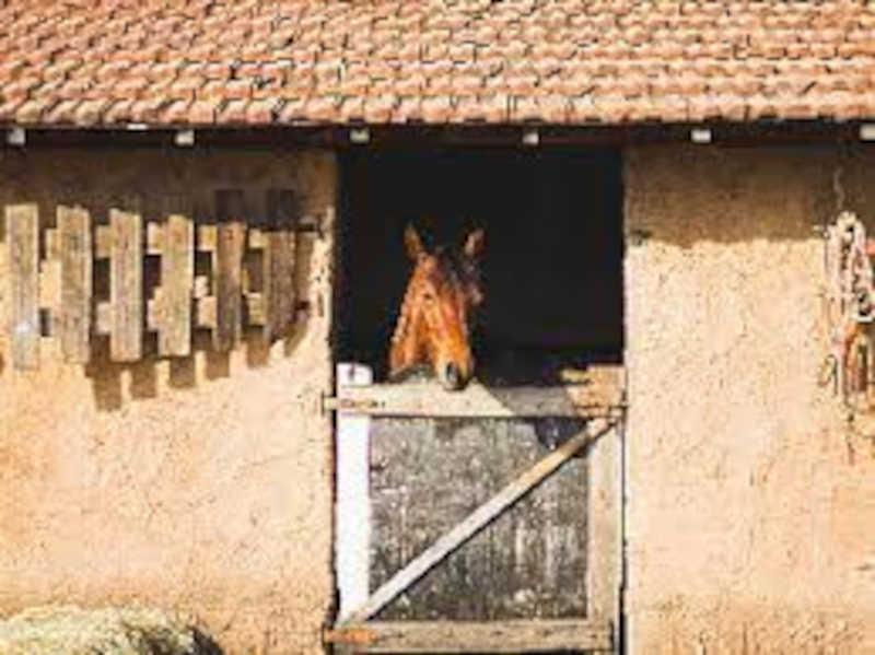Empresário é condenado por maus-tratos a cavalos usados em aulas de hipismo