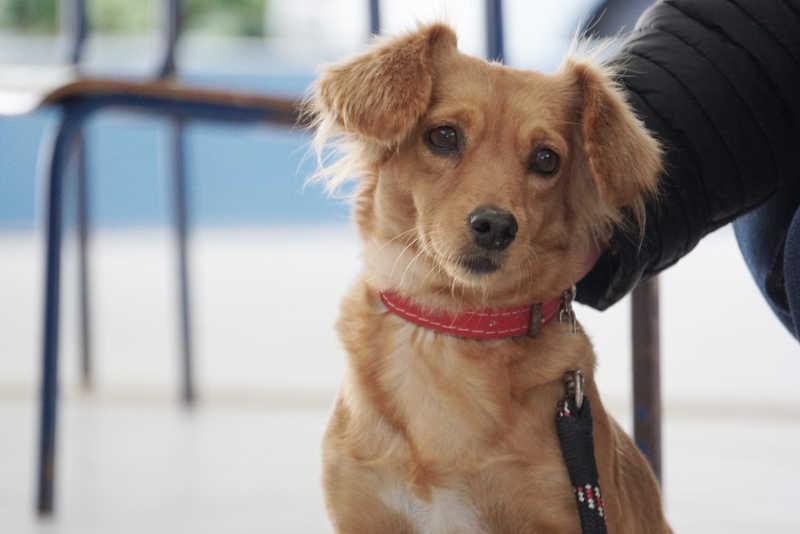 Suzano (SP) cadastra interessados em participar de mutirões de castração de animais domésticos