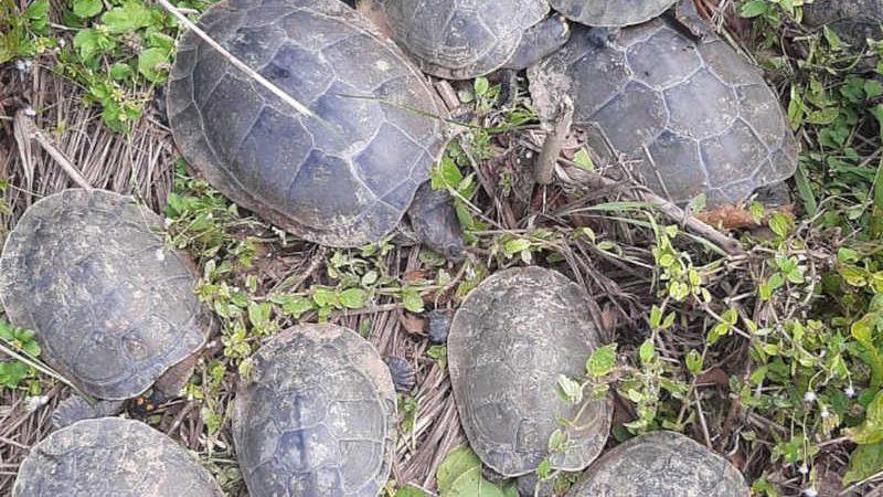 Tracajás foram encontrados mortos à beira do lago, em Luzimangues — Foto: Divulgação/Vanderlúcia Xavier