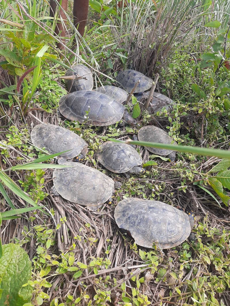 Animais mortos encontrados por família em Luzimangues — Foto: Divulgação/Vanderlúcia Xavier
