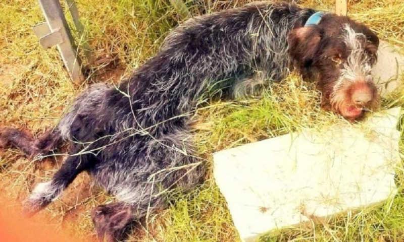 Cão idoso abandonado no lixo com sinais de maus-tratos recebe tratamento; veja vídeo