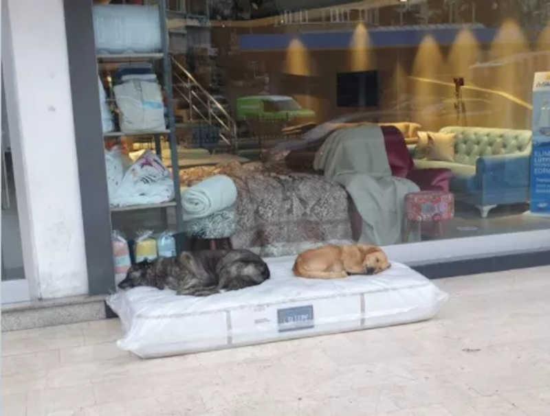 Comerciante doa colchão para cachorros dormirem em frente à sua loja