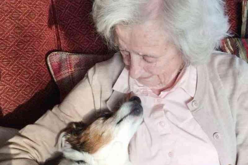 Mulher de 96 anos adota cachorro de 17: 'Não desistam dos velhinhos'