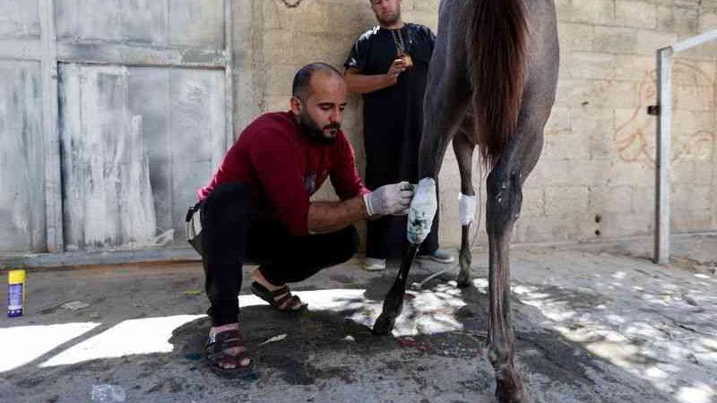 Palestinos aproveitam trégua em Gaza para tratar também de animais feridos