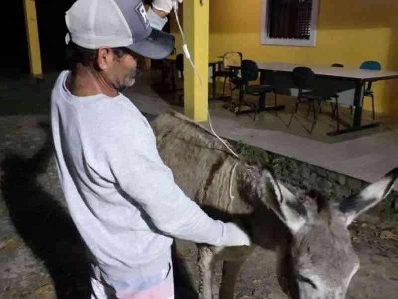 Inconformados, moradores de Penedo (AL) pedem justiça após segundo caso de facada em animal na cidade