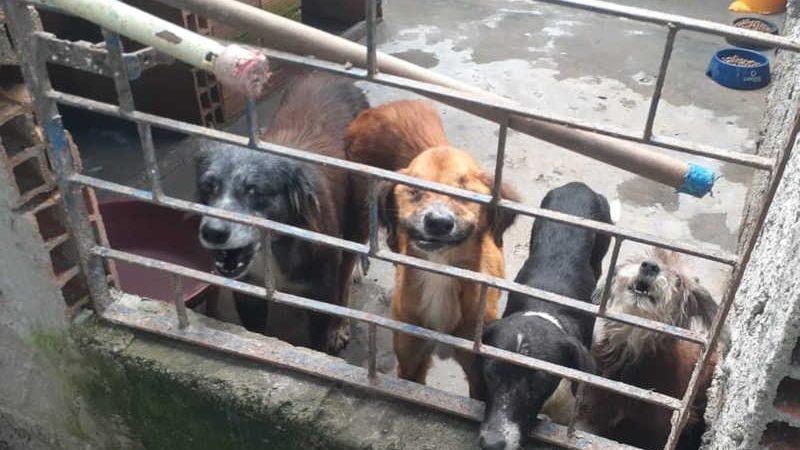 Animais eram criados em uma casa por protetora em Maceió, Alagoas — Foto: Divulgação