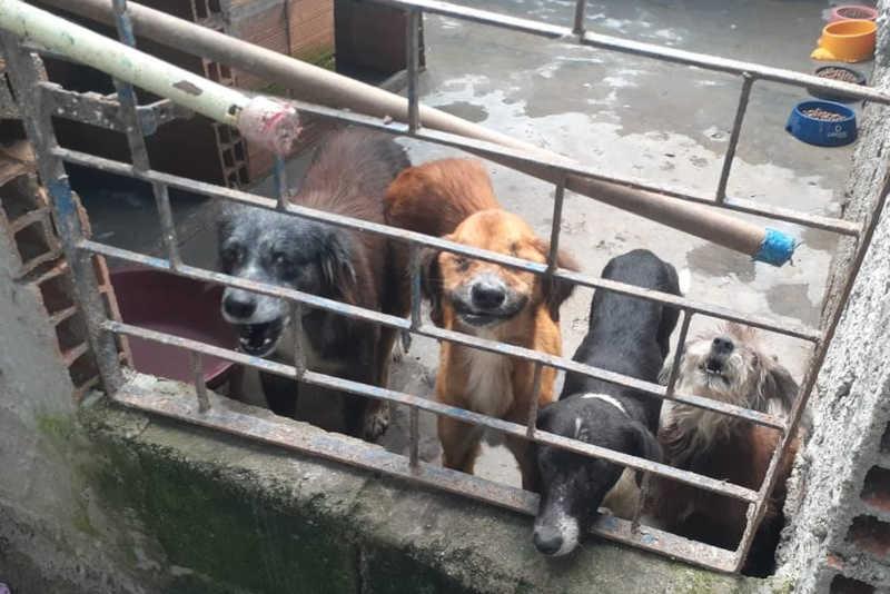 Mais de vinte animais ficam sem lar após protetora morrer em Maceió, AL