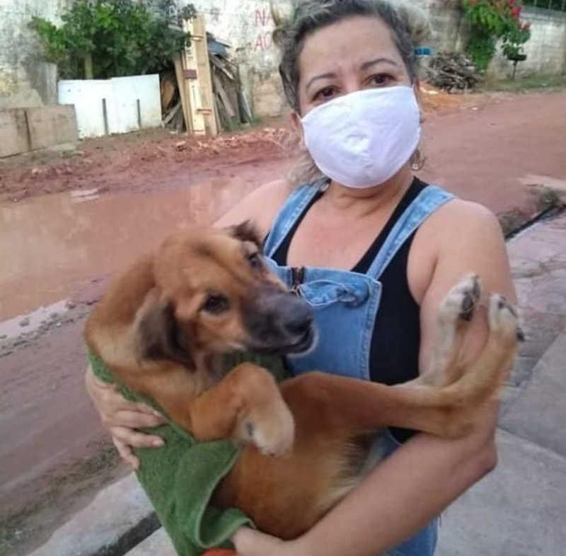 Leila Martins era tutora de dezenove cachorros e sete gatos em Maceió, Alagoas — Foto: Arquivo pessoal