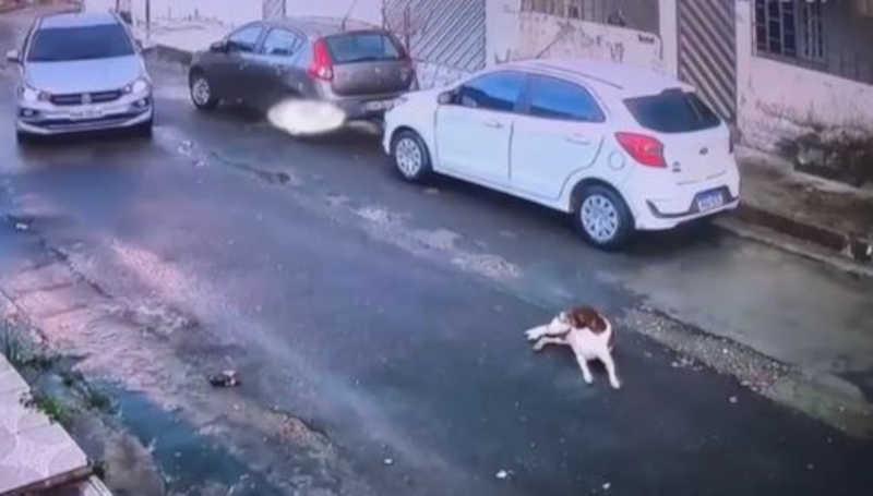 Câmera registra motorista acelerando para atropelar cão deitado na rua em Manaus, AM
