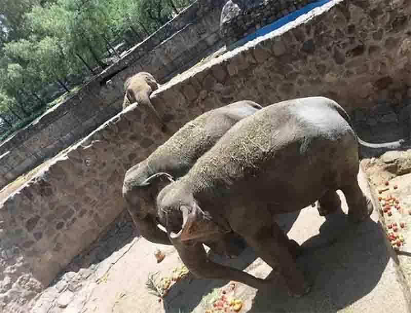 Pocha, Guillermina e o pai Tammy serão transferidos para MT. Foto: SEB/Divulgação