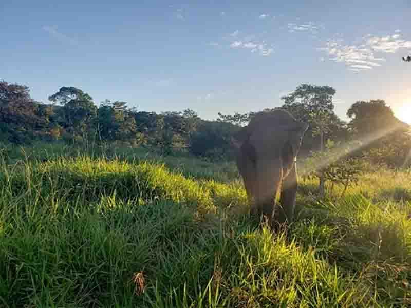 Elefanta Guida morreu no Santuário de Elefantes da América Latina, localizado em Chapada dos Guimarães. Foto: Santuário de Elefantes Brasil (SEB)