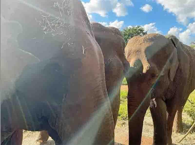 Rana, Bambi e Mara vivem no Santuário em MT. Foto: SEB/Divulgação