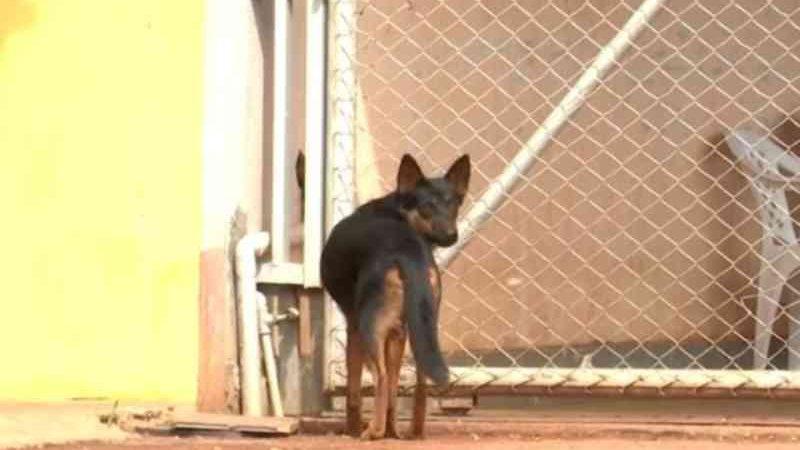 Mais de 20 cachorros são mortos por envenenamento em menos de 24h em vilarejo no oeste da BA