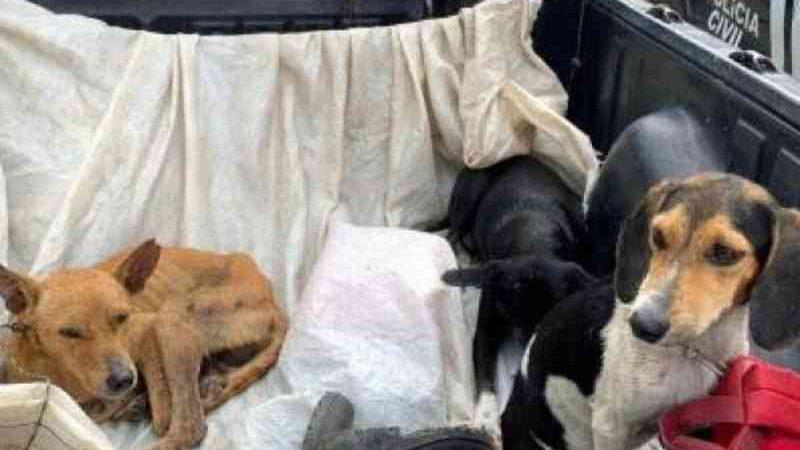Caçadores são presos por maus-tratos a seis cachorros em Eunápolis, BA