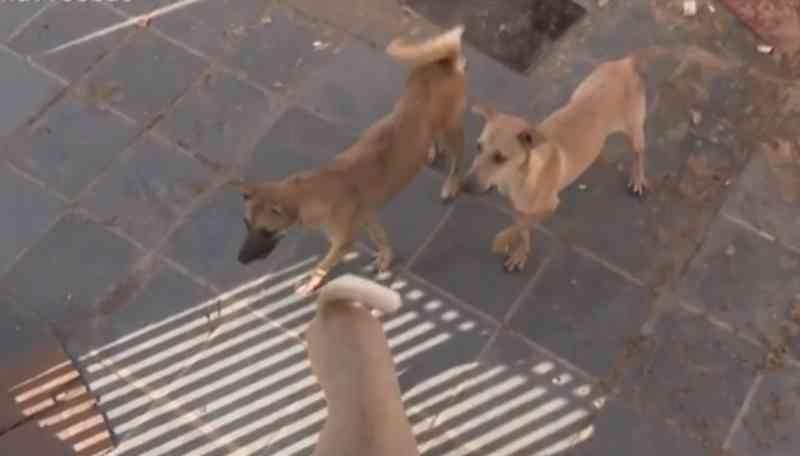 Moradores denunciam abandono de cães em casa de Feira de Santana, BA: 'Comendo as próprias fezes'