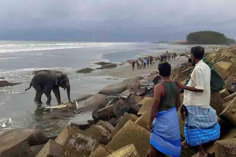 Dois elefantes são resgatados em Bangladesh depois de 4 dias bloqueados em uma praia