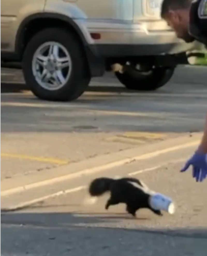 Polícia salva doninha com cabeça presa num copo; vídeo