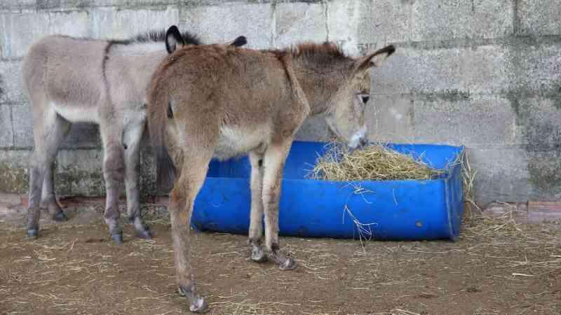 Santuário abriga jumentos para combater maus-tratos aos animais em Fortaleza, CE