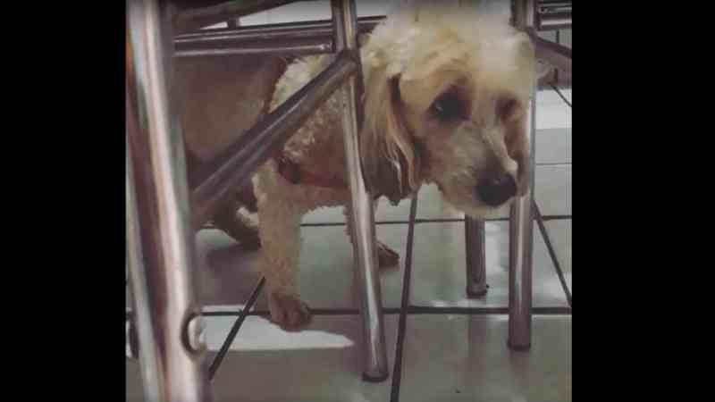 Casal de idosos é preso por fazer cirurgia caseira em cachorro em Iguatu, no Interior do Ceará