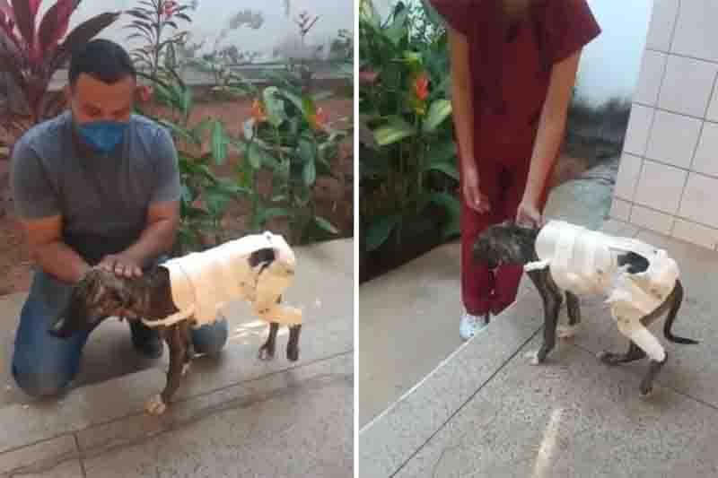 Criada por estudante, prótese de PVC recupera fratura em cachorrinha de rua