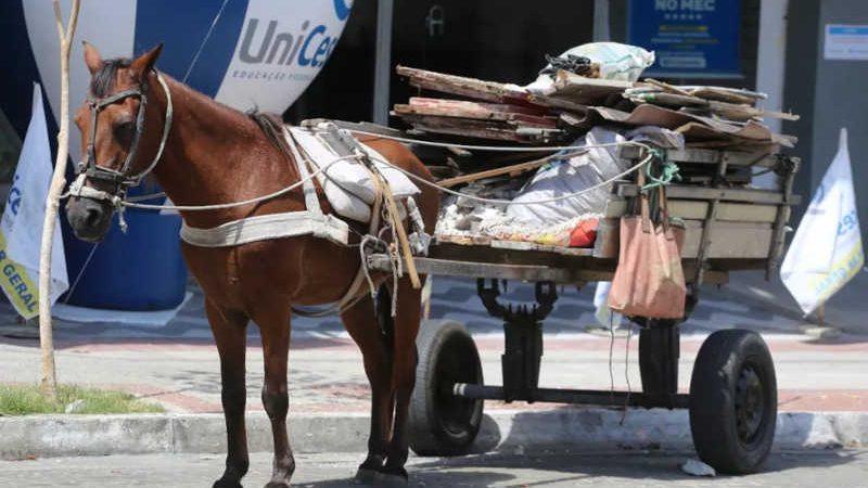 Uso de carroças puxadas por animais é proibido em Sobral, no interior do Ceará. — Foto: Prefeitura de Sobral/ Divulgação