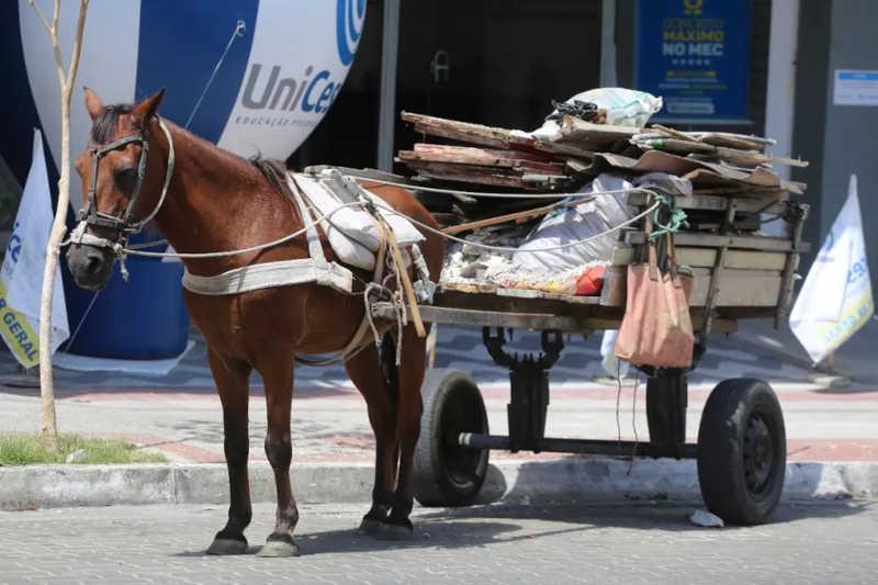 Prefeitura proíbe uso de veículos com tração animal em Sobral, CE