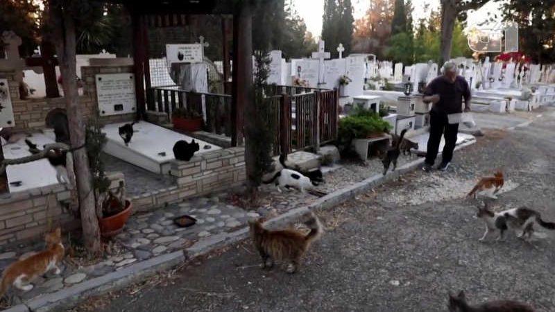 Voluntários pedem ajuda para controlar superpopulação de gatos no Chipre