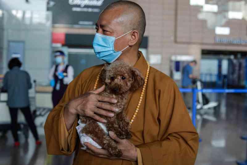 Monge budista resgata milhares de cachorros da rua na China