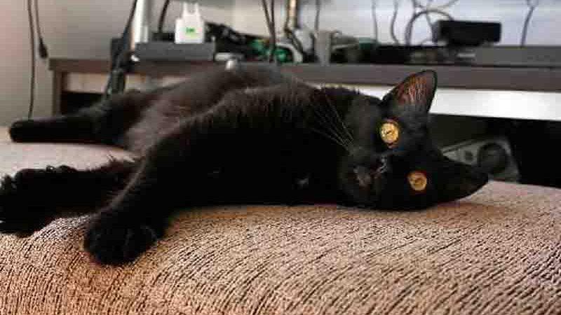 A gatinha Miau foi castrada após ser salva das ruas (crédito: Elizabeth Oliveira/Divulgação)